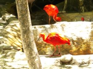 red-red-birds
