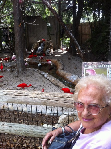 Loving the scarlet cranes at Palm Beach Zoo